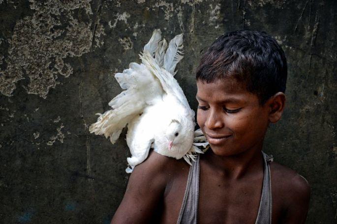 debiprasad-mukherjee-hindistan-sergileme-messenger-of-peace