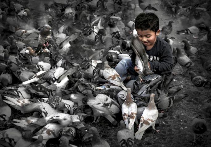 sergey-moskvin-rusya-sergileme-boy-and-pigeons