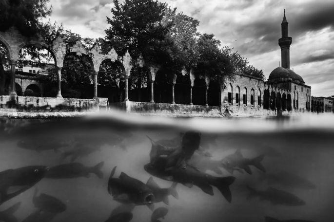 Giray Kocaman - Mansiyon - Su