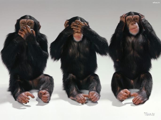 Three-Monkeys-Wallpaper-Hd