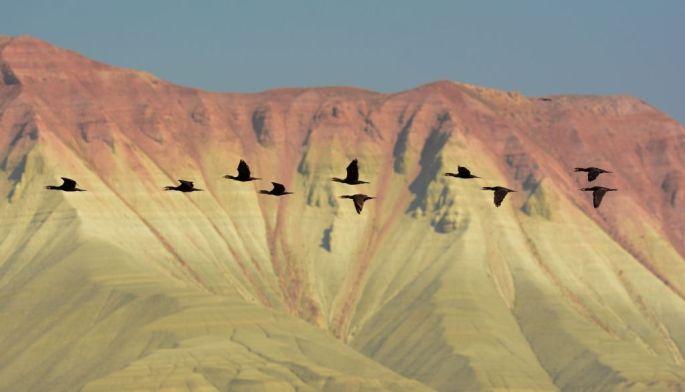Alper Tüydeş, Nallıhan Kuşları