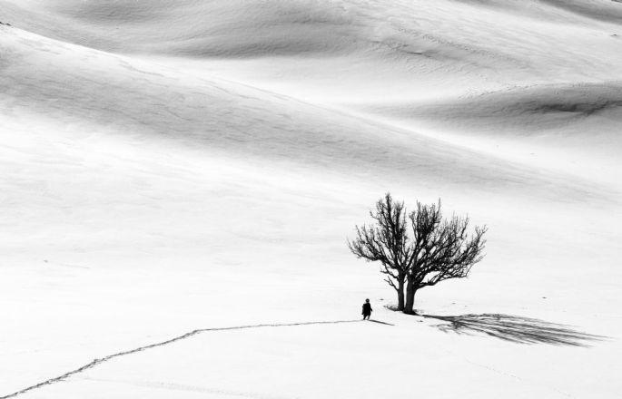 Hasan Hüseyin Birlik, Ağaç