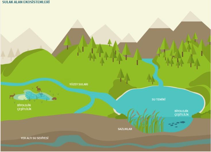 Sulak Alan Ekosistemleri