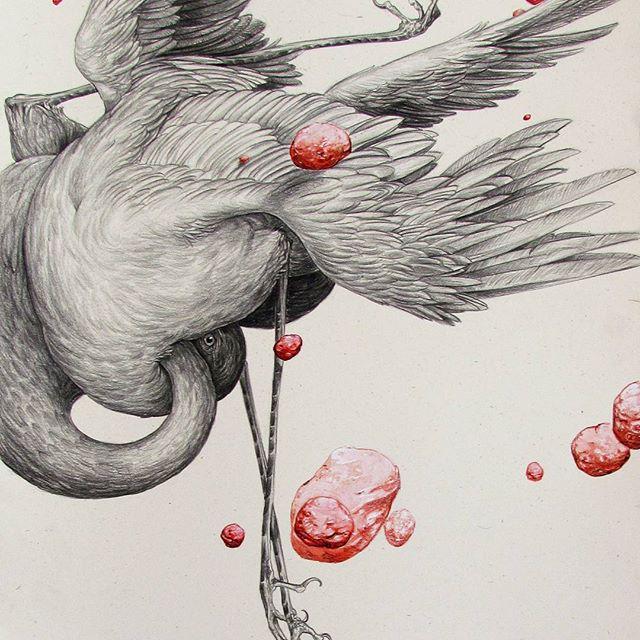 Kuşlar 04